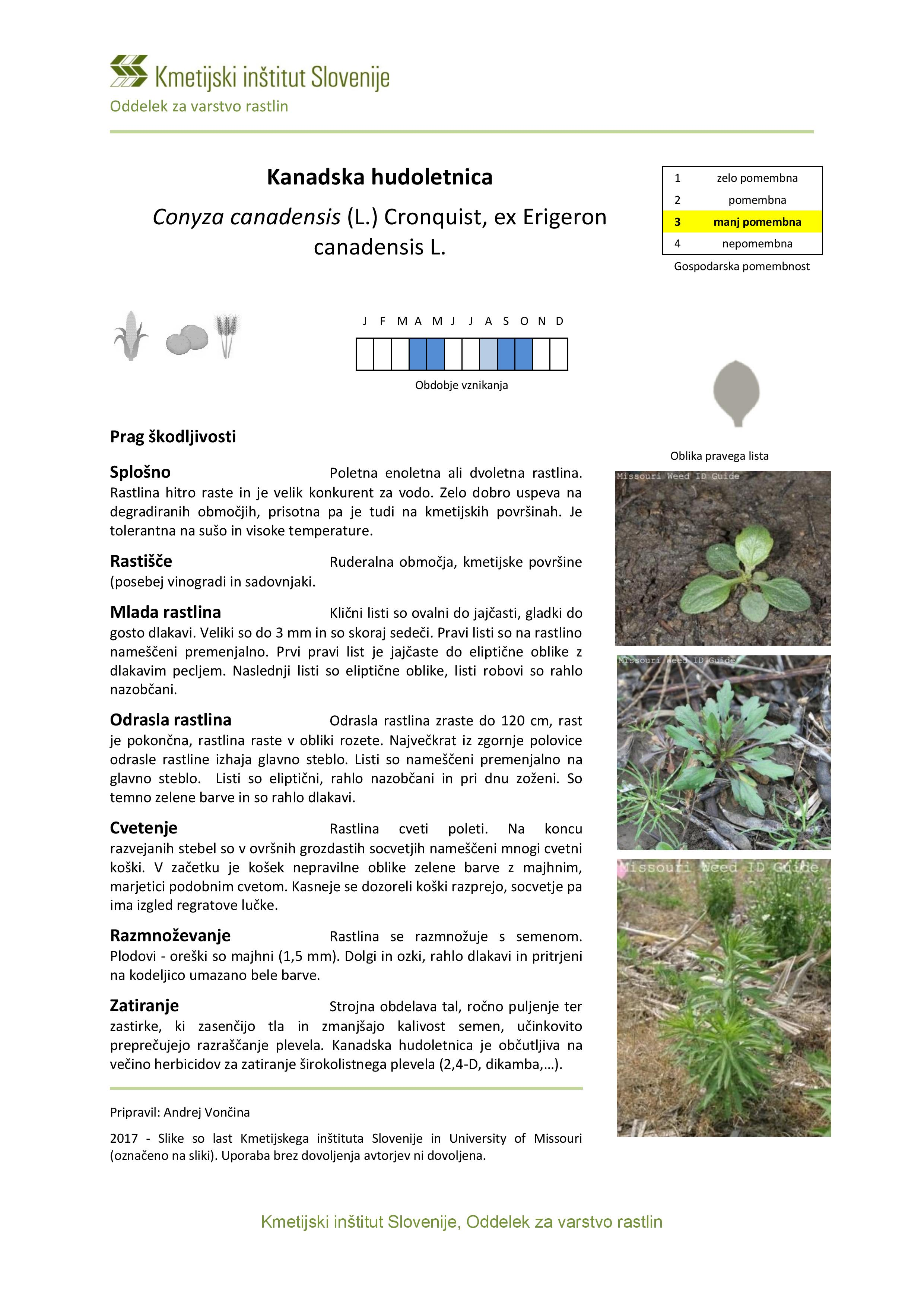 Conyza_canadensis-page-001