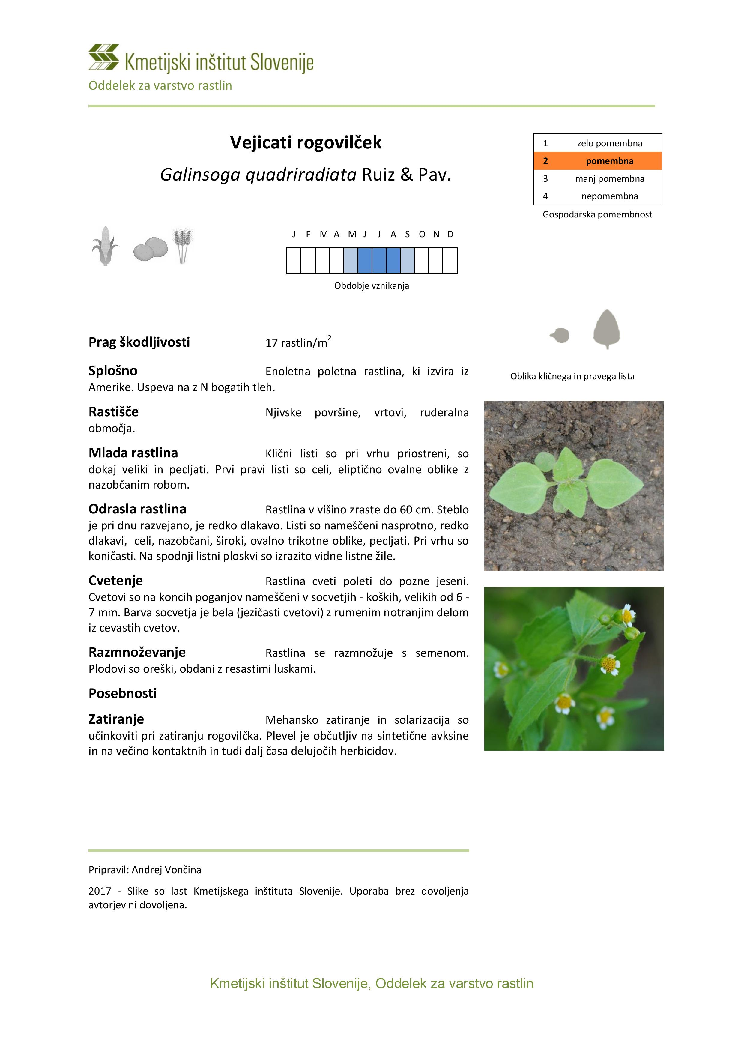 Galinsoga_quadriradiata-page-001