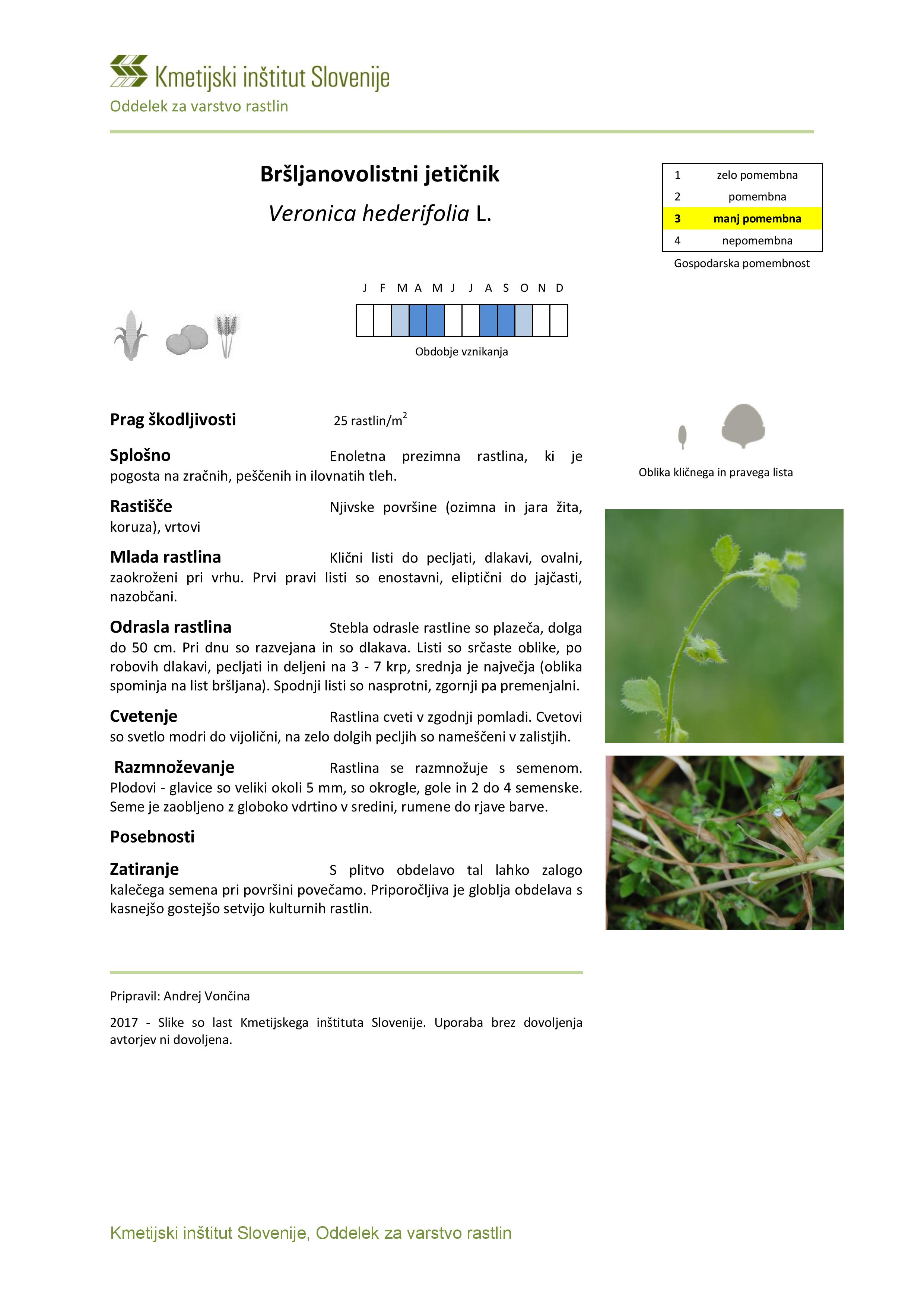 Veronica_hederifolia-page-001