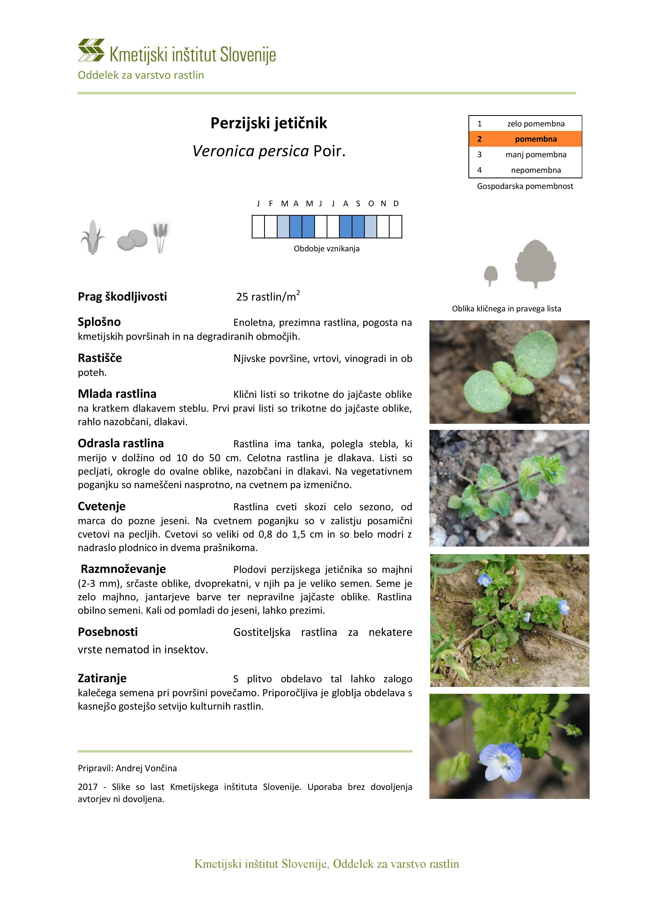 Veronica_persica-page-001