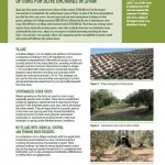 Inspiration Sheet: The most important management options for olive orchards in Spain